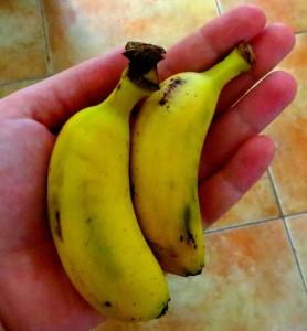 Ungefährliches und extrem knuffiges Obst: Babybananen!