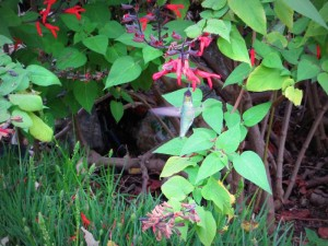 Finde den Kolibri!