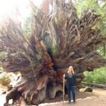 Yosemite National Park – Der Wald der roten Riesen