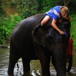 Nachricht an einen Elefanten