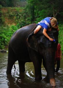 Elefantenwäsche