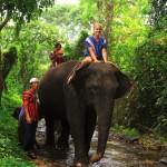 Elefantenreiten in Thailand – Ein besonderes Dschungeltrekking