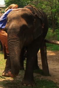 Elefantenaufstieg