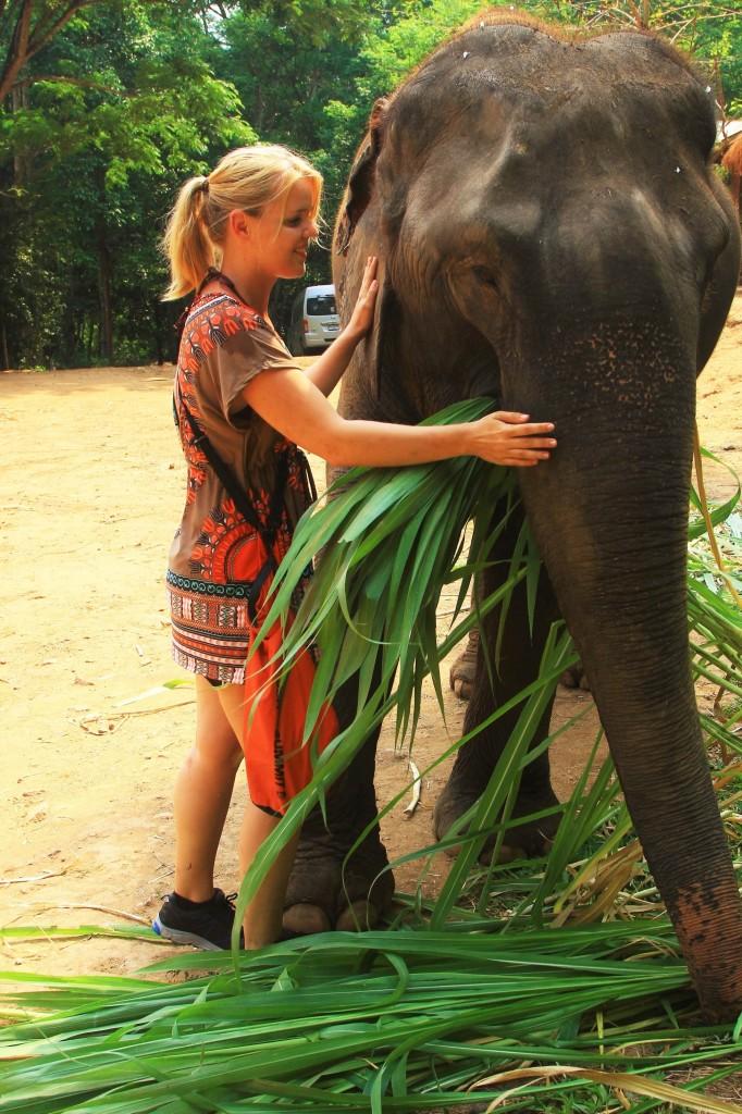 Elefantengras