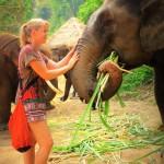 Die Patara Elephant Farm in Chiang Mai