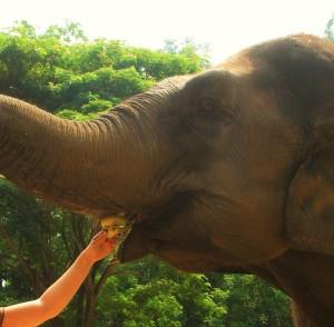 Elefantenmaul