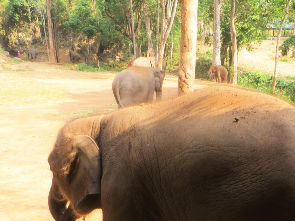 Elefantenrücken