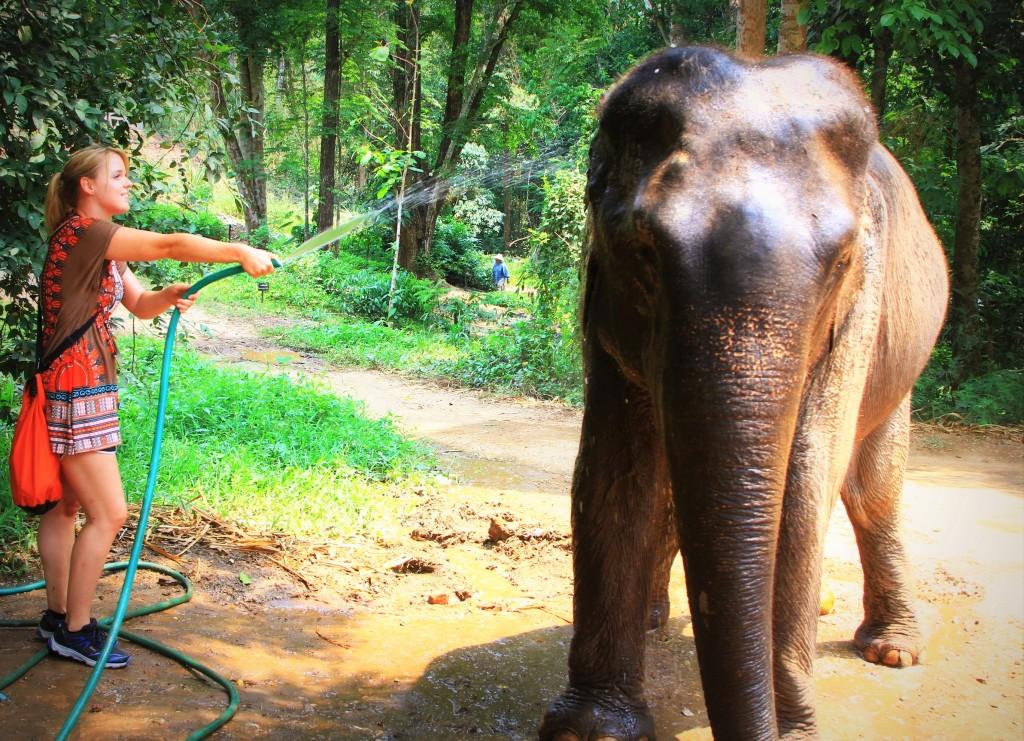 Elefantenreinigung