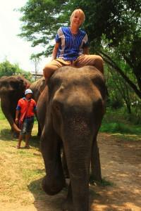 Elefantensitz